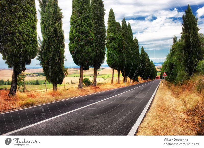 Eine typische Landschaft in der Toskana Umwelt Natur Pflanze Himmel Baum Gras Wiese gelb gold grün Italien Aussicht Bauernhof Feld Szene ländlich toskanisch