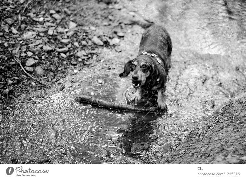das nonplusultra Hund Natur Wasser Freude Tier Wald Umwelt Bewegung Spielen Freizeit & Hobby dreckig Erde Ast Lebensfreude Urelemente Haustier
