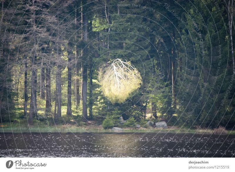 Himmelszeichen Glück Wohlgefühl Ausflug Natur Urelemente Frühling Schönes Wetter Baum Seeufer Bayern Deutschland Menschenleer Holz beobachten entdecken genießen