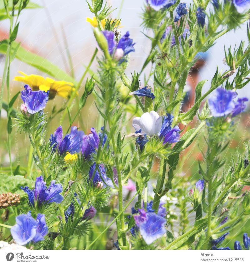 Floras Füllhorn I Pflanze Blume Wiesenblume Blühend Wachstum Freundlichkeit hell natürlich blau gelb grün überschüssig hellgrün zartes Grün Farbfoto