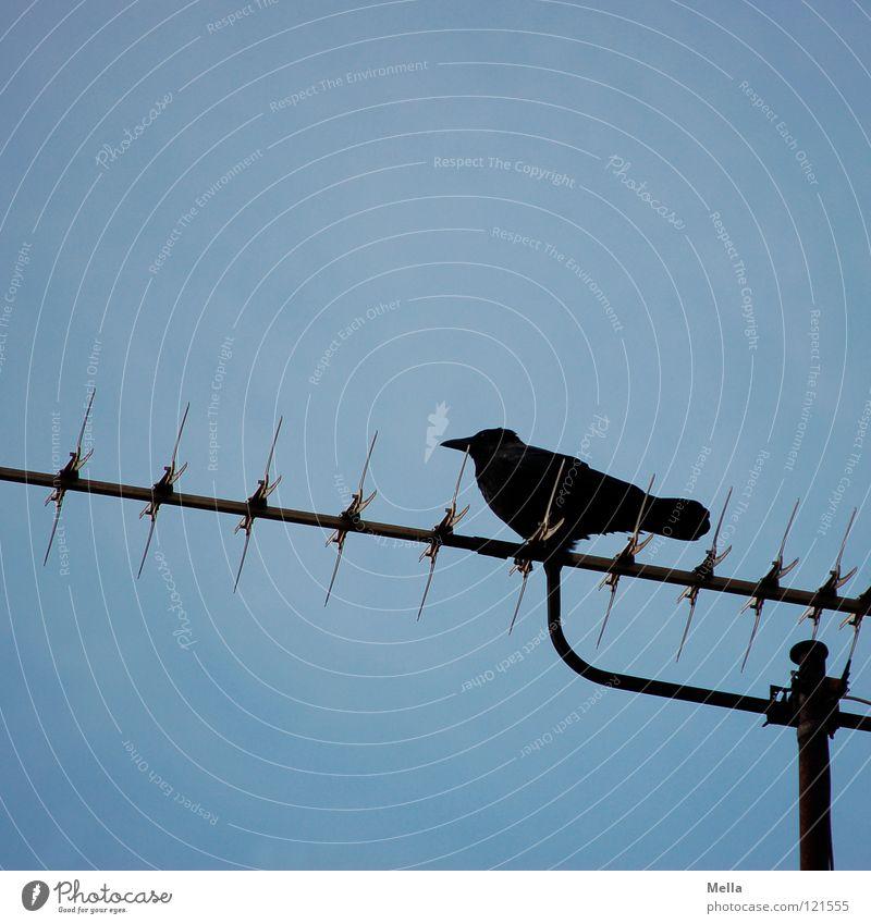 Ausguck Himmel blau schwarz oben Vogel hoch sitzen Technik & Technologie Kommunizieren Aussicht Antenne hocken Rabenvögel Krähe überblicken Elektrisches Gerät