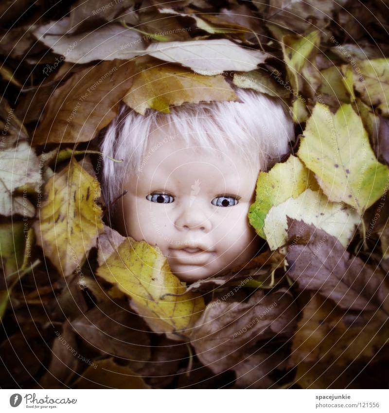 Lost & Found blau alt Baum Freude Blatt Auge Herbst Kopf blond Angst Wildtier süß niedlich bedrohlich festhalten Spielzeug