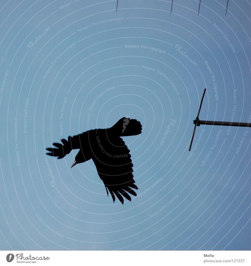 Abflug Krähe Rabenvögel Aaskrähe Abheben fliegen flüchten erschrecken Schüchternheit schwarz Antenne Vogel Elektrisches Gerät Technik & Technologie Luftverkehr