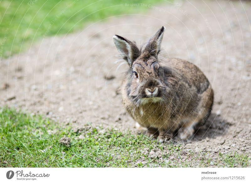 Mein Name ist HASI Natur grün Sommer Erholung Tier Wiese Freiheit braun Zufriedenheit Erde genießen beobachten einfach niedlich Freundlichkeit Neugier