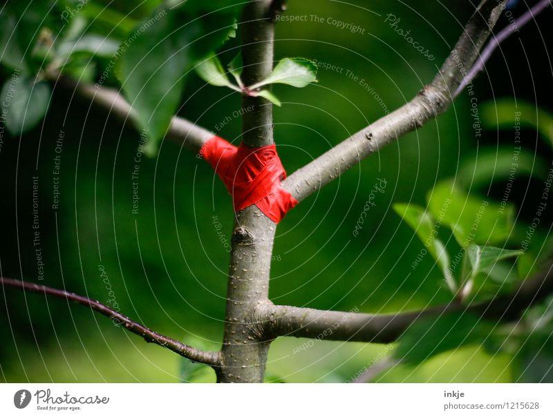 das kleine Aua Gartenarbeit Umwelt Pflanze Frühling Sommer Baum Baumstamm Apfelbaum Verband Klebeband Kreuz Streifen Schnur kaputt Krankheit grün rot Schutz