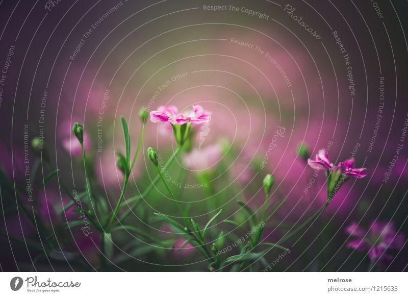 düster fürs WE Natur schön grün Sommer Blume dunkel Traurigkeit Gras Stil Garten braun Stimmung rosa leuchten Wachstum elegant
