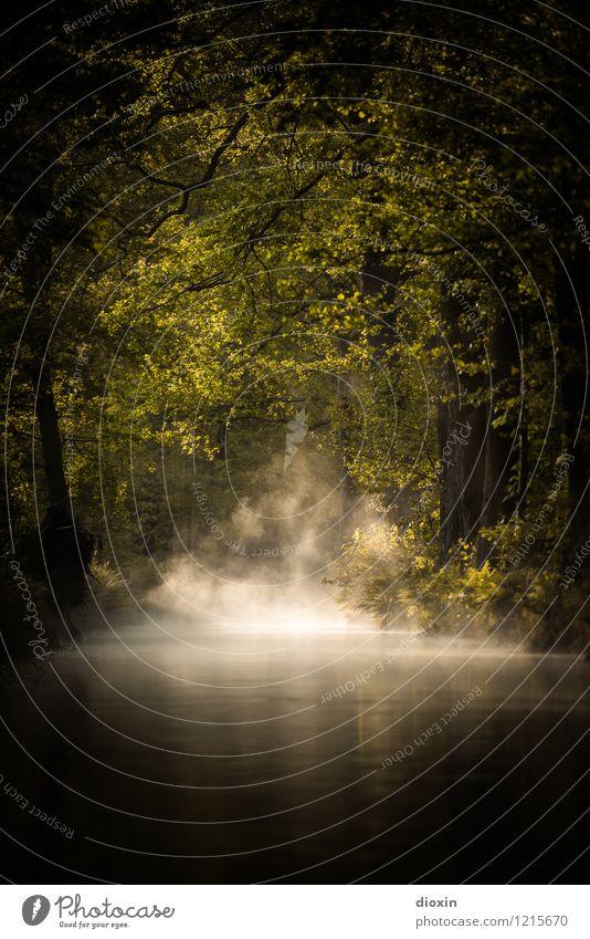 Spreedorado | Spreewald Sunrise [2] Natur Ferien & Urlaub & Reisen Pflanze Sommer Baum Landschaft ruhig Wald Umwelt natürlich Tourismus Nebel Idylle Ausflug
