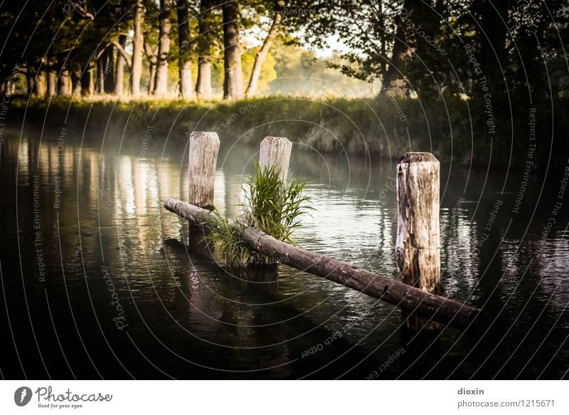 Spreedorado | Spreewald Sunrise [4] Ferien & Urlaub & Reisen Tourismus Ausflug Umwelt Natur Landschaft Pflanze Wasser Sonne Sonnenlicht Wiese Wald Fluss Kanal