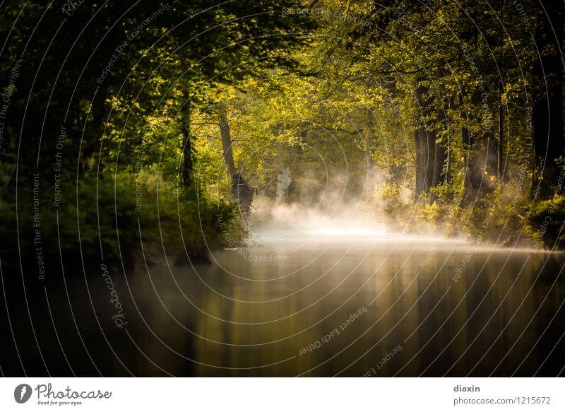 Spreedorado | Spreewald Sunrise [5] Natur Ferien & Urlaub & Reisen Pflanze Sommer Wasser Baum Landschaft ruhig Wald Umwelt natürlich Tourismus Nebel Idylle
