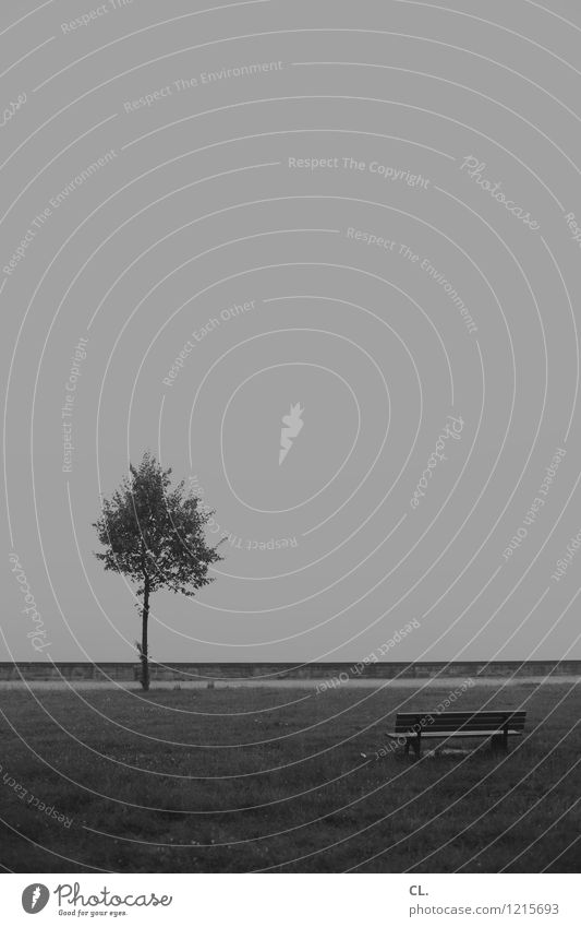 baum und bank Himmel Natur Baum Einsamkeit Umwelt Traurigkeit Wiese grau Park Wetter Nebel trist Klima Pause Bank Zukunftsangst