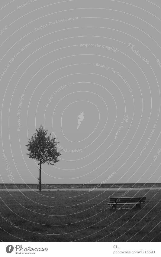 baum und bank Umwelt Natur Himmel Klima Wetter schlechtes Wetter Nebel Baum Park Wiese Bank trist grau Traurigkeit Fernweh Einsamkeit Zukunftsangst Pause