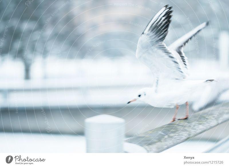 Im Abflug weiß Tier Winter schwarz grau Fliege Flügel Brücke Abheben Möwe Winterstimmung