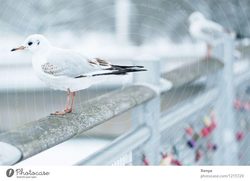 Möwenblick weiß Tier Winter grau Brücke Möwe Winterstimmung