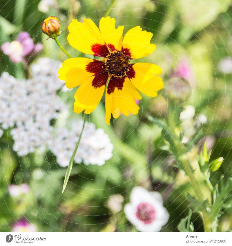 Floras Füllhorn IV Natur Pflanze grün weiß Blume rot gelb Wiese hell Wachstum Blühend Freundlichkeit Blumenwiese Wiesenblume