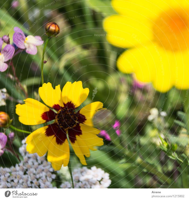 Floras Füllhorn III Natur Pflanze grün Blume gelb Wiese hell Wachstum Blühend Freundlichkeit Blumenwiese Wiesenblume