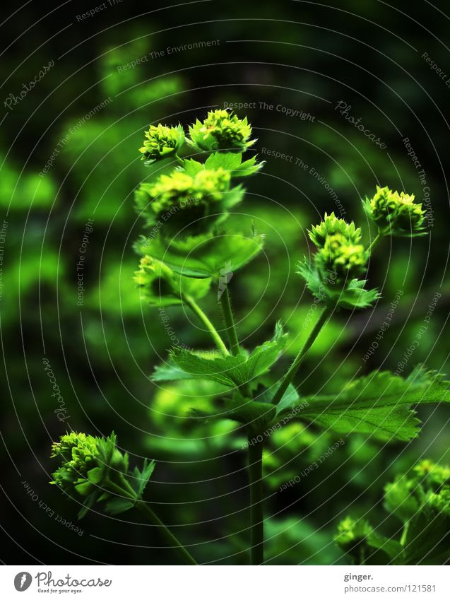 Ich träume grün vom Frühling Natur grün Pflanze Blume Blatt Frühling Wachstum Stengel Blütenknospen Ton-in-Ton