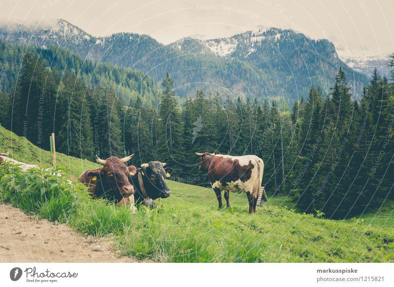 hochgebirgsmilchspender Ferien & Urlaub & Reisen Landschaft Tier Ferne Berge u. Gebirge Freiheit Felsen Zufriedenheit Tourismus wandern authentisch Ausflug