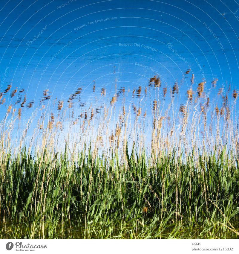 ndrwtrmdw Wellness harmonisch Erholung ruhig Ferien & Urlaub & Reisen Sommer Sommerurlaub Umwelt Natur Wasser Wolkenloser Himmel Schönes Wetter Gras Wiese Feld