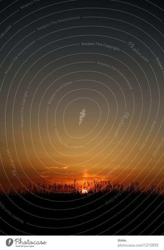 hachja Himmel Natur schön Sommer Erholung Einsamkeit ruhig Leben Küste Wege & Pfade Zeit Horizont Feld Kraft authentisch Sträucher