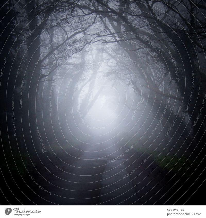 the devil rides out Baum Wald dunkel Angst Verkehr Nacht Ast geheimnisvoll gruselig verloren Panik Hexe Verhext beängstigend Holzmehl Mitternacht