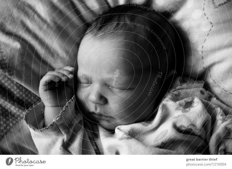 Schlafendes Baby feminin Kopf 1 Mensch 0-12 Monate schlafen dünn Glück schön klein positiv grau schwarz weiß Erschöpfung Geburt träumen Schwarzweißfoto