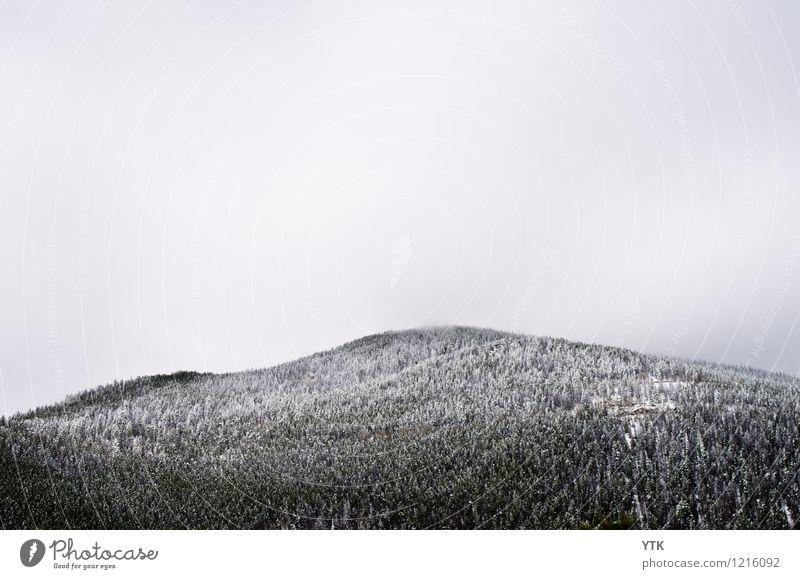 Snow Cap Umwelt Natur Landschaft Luft Himmel Wolken Winter Klima Klimawandel Wetter schlechtes Wetter Eis Frost Schnee Baum Wald Berge u. Gebirge Gipfel