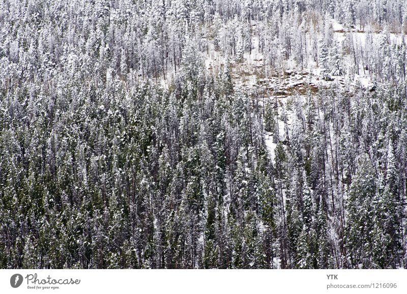 Like 100 Paintbrushes Umwelt Natur Landschaft Tier Winter Klima Wetter Eis Frost Schnee Wald Felsen Berge u. Gebirge Gipfel außergewöhnlich Zufriedenheit