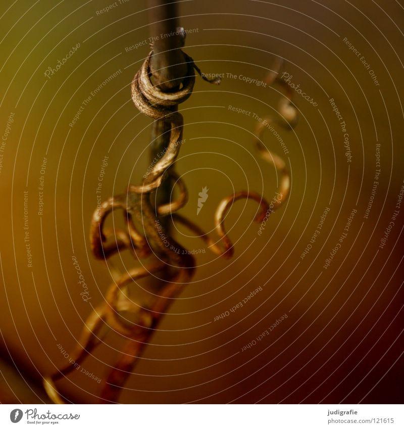 Verwicklungen verwickelt umwickelt durcheinander Wachstum gedeihen Physik braun Umwelt Pflanze Winter Herbst Sträucher zart weich Farbe Natur Zweig wickeln