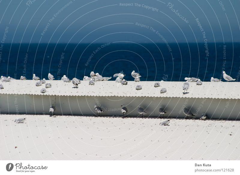 Schattenparker Wasser weiß Meer blau Freude Ferien & Urlaub & Reisen kalt Freiheit träumen Wärme Vogel fliegen Fröhlichkeit Tiergruppe rein fantastisch