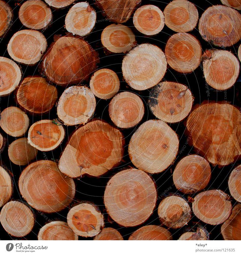 wooden wood Holz Physik Baum mehrere Baumstamm Abholzung Waldsterben Winter Herbst Brennholz Jahresringe braun Wärme Maserung viele Baumkäfer Hütte Fällarbeiten