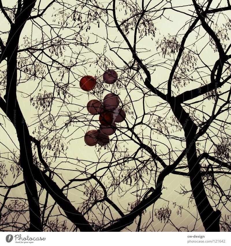 K R E U Z U N G Himmel Natur schön Baum Wolken schwarz Winter Wald dunkel Bewegung Herbst grau Feste & Feiern hell Garten Party