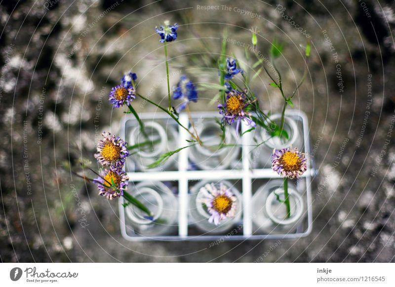 Steckplatz (Trockenblumenversion) schön Blume Blüte Stil klein Lifestyle Freizeit & Hobby Dekoration & Verzierung Blühend Vergänglichkeit Wandel & Veränderung