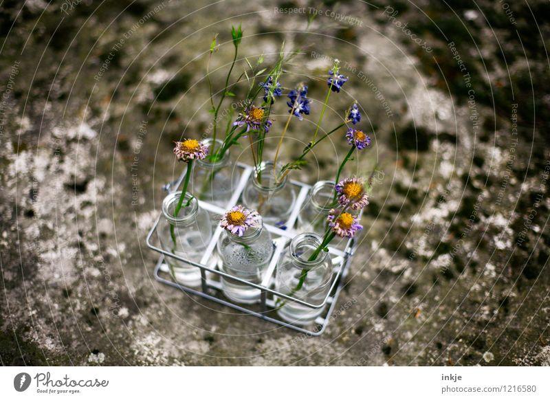 Trockenblumen Stil Garten Dekoration & Verzierung Frühling Sommer Blume Blüte Blumenvase Vase Glas alt schön trocken Vergänglichkeit Wandel & Veränderung