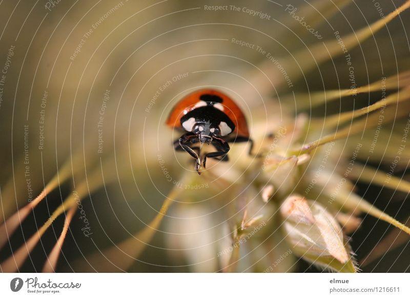 Karl Pflanze Farbe rot Einsamkeit Tier schwarz Wege & Pfade Glück Feld elegant warten Kreativität einzeln niedlich Schönes Wetter Neugier