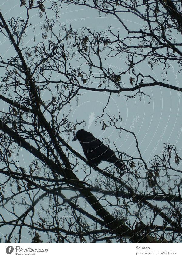 Der Herbst des Einsamen Krähe Baum Baumkrone schwarz Trauer Einsamkeit November Vogel grau Außenaufnahme Himmel Ast Krähenfüße Weltschmerz Traurigkeit