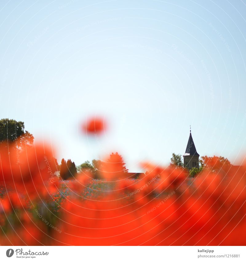 red planet Umwelt Natur Landschaft Pflanze Tier Sonne Sonnenlicht Sommer Klima Wetter Schönes Wetter Baum Blume Gras Blatt Blüte Wildpflanze Wiese Kirche