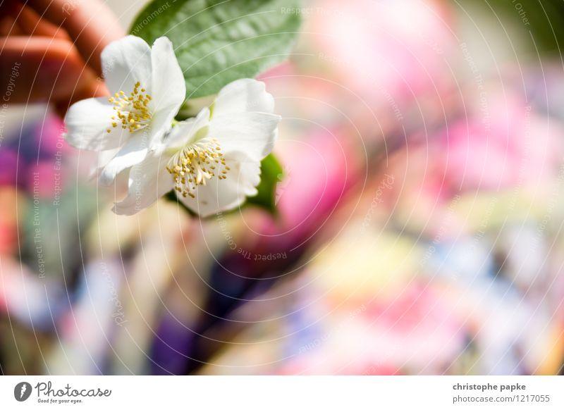 Blümchenbild Pflanze Frühling Sommer Blüte Mode Hose Blühend Kirschblüten Apfelblüte Farbfoto mehrfarbig Außenaufnahme Nahaufnahme Detailaufnahme Makroaufnahme