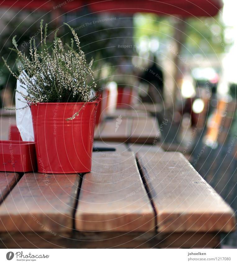 Summer in the City Städtereise Sommer Restaurant Café Straßencafé Pflanze Topfpflanze Köln Nordrhein-Westfalen Kleinstadt Stadt Stadtzentrum Altstadt