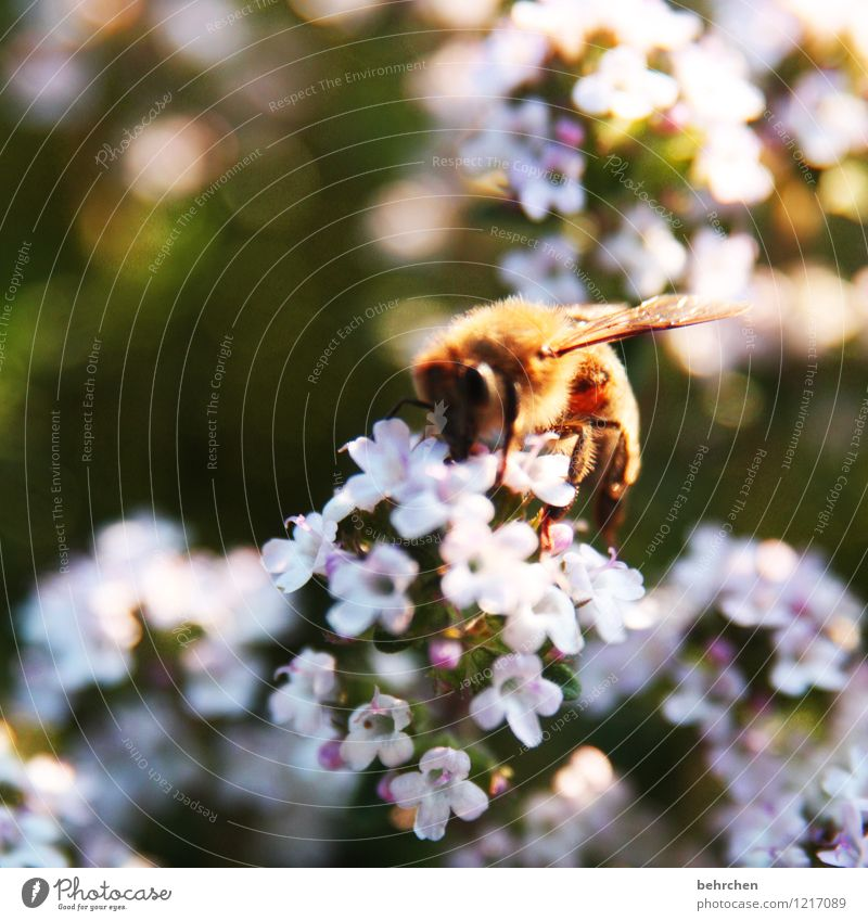 sammlerin Natur Pflanze schön Sommer Blume Blatt Tier Frühling Blüte Wiese Garten fliegen braun rosa Park Feld