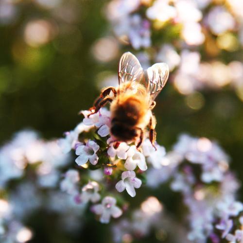 fleißig Pflanze schön Sommer Blume Blatt Frühling Blüte Herbst Wiese Garten fliegen braun Park Flügel Blühend Schönes Wetter