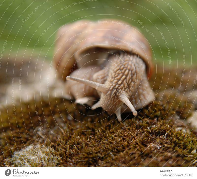 Koalitionspolitik Natur ruhig Bewegung Zeit Geschwindigkeit Ernährung beobachten Turm Frankreich Langeweile Schnecke Sportveranstaltung Politik & Staat krabbeln