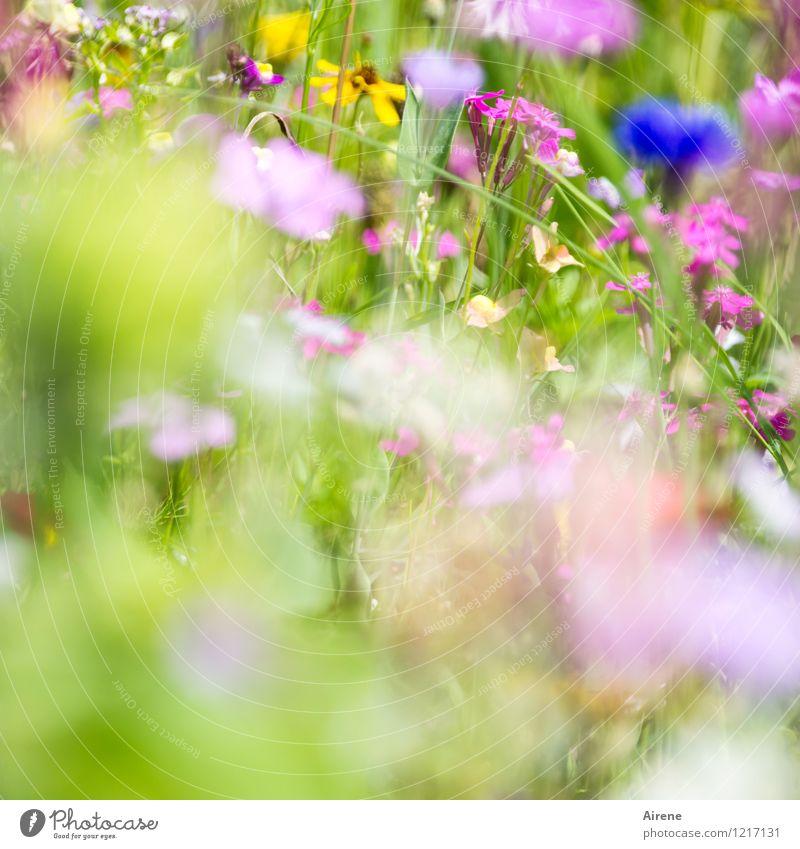 Gruß von Flora 2 Pflanze Blume Wildpflanze Wiesenblume Blumenwiese Blühend Wachstum Freundlichkeit hell blau mehrfarbig gelb grün rosa Natur hellgrün zart