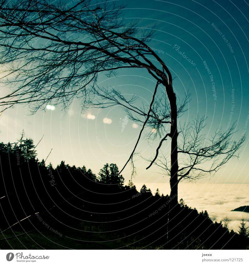 angepasst und trotzdem tot maßgearbeitet Anpassung Baum Biegung gekrümmt Berghang Sturm biegen Berge u. Gebirge Himmel lothar nachgeben Tod Wind wolkenmeer