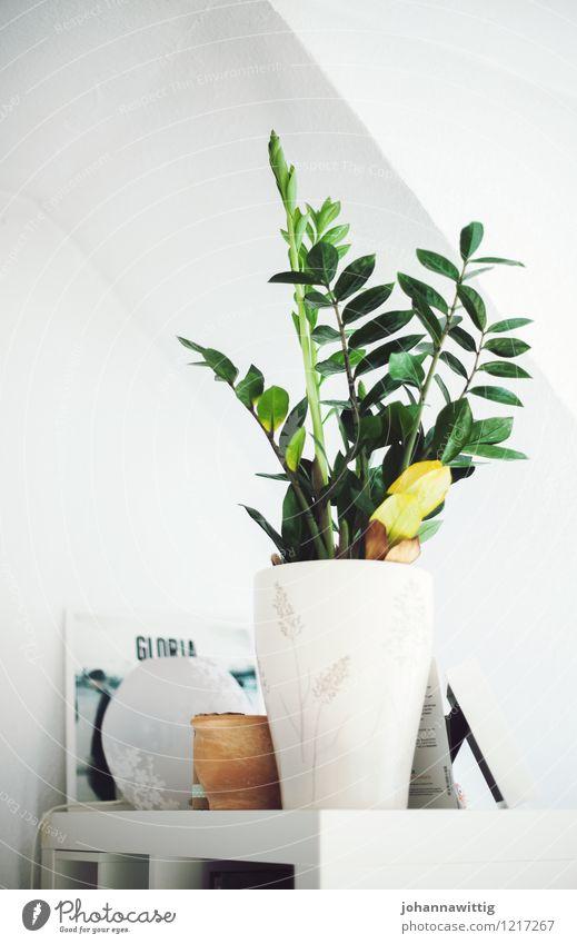 grün auf weiss. Jugendliche Pflanze Sommer weiß Haus Innenarchitektur Gesundheit Wohnung Zufriedenheit Raum Wachstum elegant Idylle ästhetisch einzigartig