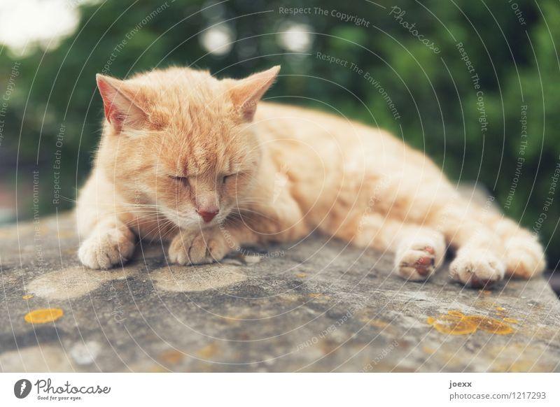 Zu heiß! Natur Sommer Katze 1 Tier liegen schlafen braun grün Gelassenheit ruhig Müdigkeit Erschöpfung Erholung Farbfoto Außenaufnahme Menschenleer Tag