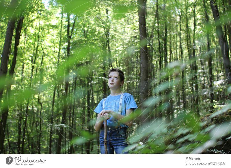 NachDenker maskulin Junge Kindheit 1 Mensch 8-13 Jahre Natur Sommer Schönes Wetter Baum Wald Jeanshose Stock beobachten entdecken hören Blick stehen Coolness