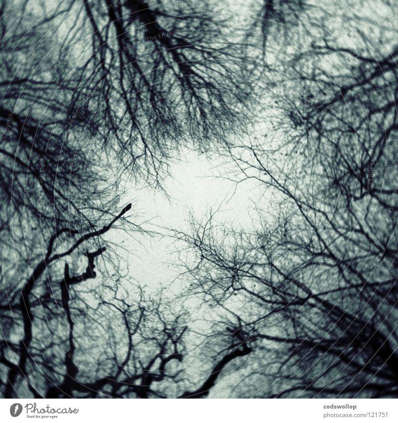 Llareggub Baum Wald dunkel träumen Angst Ast gruselig verloren Panik Holzmehl Mitternacht Spuk