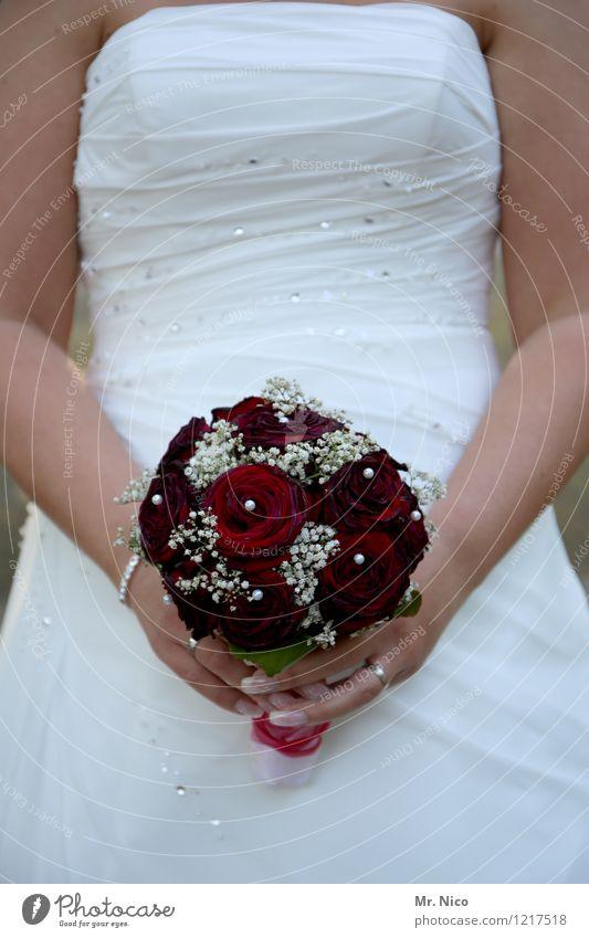 wolle rose kaufen ? Lifestyle Hochzeit feminin Frau Erwachsene Arme Accessoire rot weiß Glück Zufriedenheit Lebensfreude Zusammensein Liebe Verliebtheit Treue