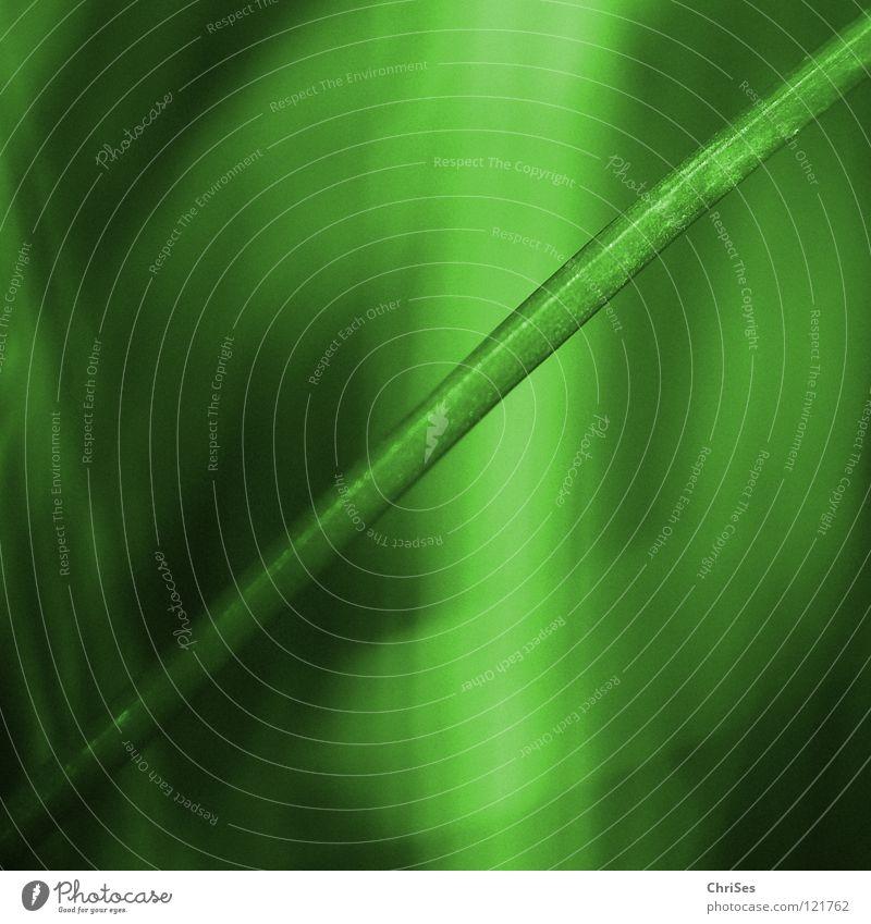 Quertreiber : Grasgrün_03 Natur Pflanze Einsamkeit Wiese Gefühle Garten Frühling klein Feld Wachstum Rasen Spitze Stengel Halm