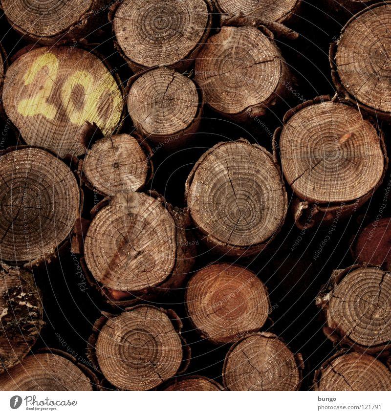 200 Natur alt Baum Umwelt Holz Klima Baumstamm Umweltschutz Forstwirtschaft heizen Meter Brennholz Totholz Abholzung Klimaschutz 200